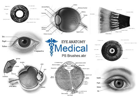 20 Medical - Eye PS Brushes abr