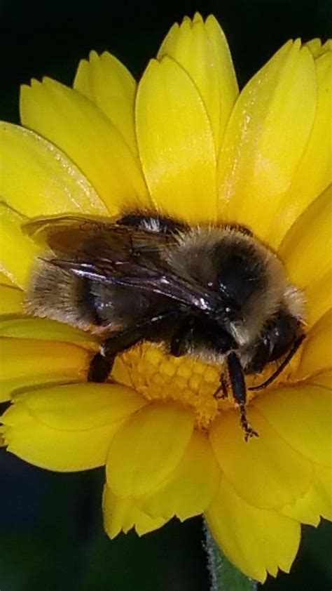 Recovery: Bringing Back Bumble Bees - Garden