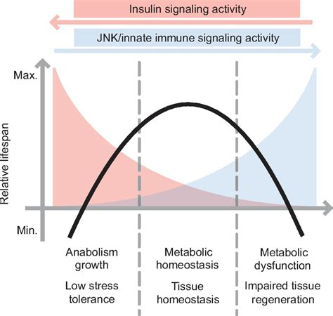 Promoting longevity by maintaining metabolic and