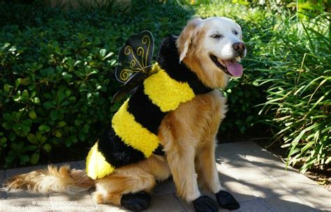Top 5 Halloween Costumes For Golden Retrievers That Are