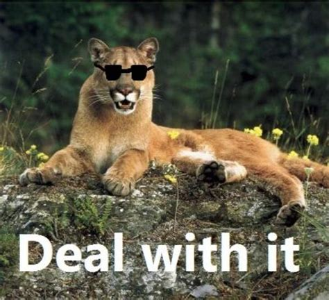 [Image - 52619]   Cougar/Cougar out of f***ing Nowhere