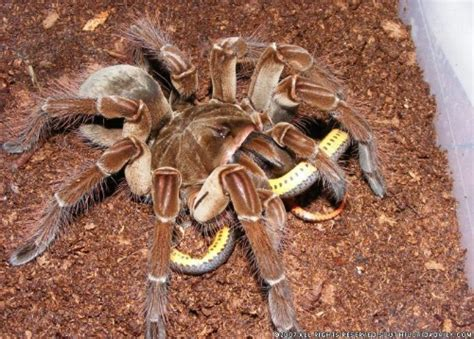 Suggestion: Spiders Are Scary - TV Tropes Forum