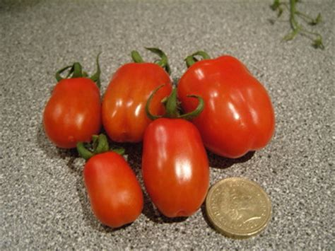 Unusual Shaped Tomatoes : Grows on You