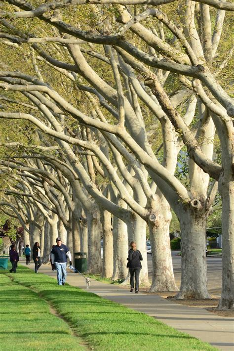 ACTrees Announces 2014 Street Trees Photo Contest Winners